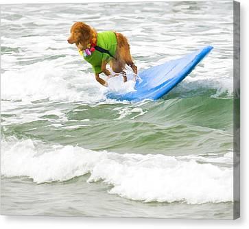 Surf Dog - Outta Here Canvas Print by Waterdancer
