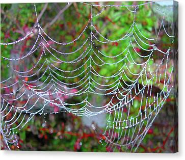 Surfing The Web Canvas Print by Randy Rosenberger