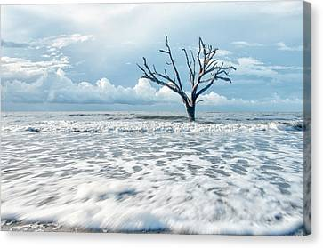 Surfside Tree Canvas Print by Phyllis Peterson