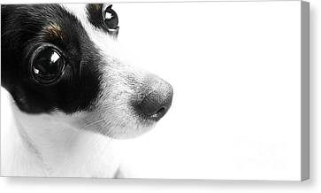 Fox Terrier Canvas Print - Surprised Dog Face by Jorgo Photography - Wall Art Gallery
