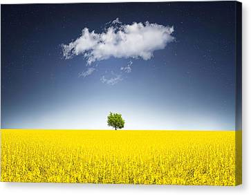 Surreal Canola Field Canvas Print by Bess Hamiti