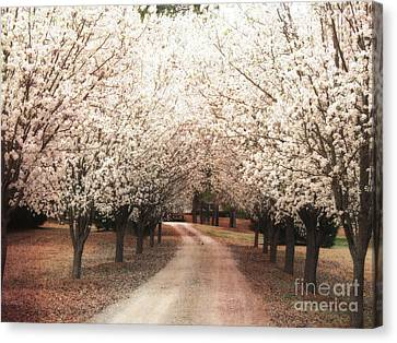 Surreal Dreamy Dogwood Trees South Carolina Canvas Print by Kathy Fornal