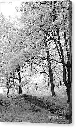 Surreal Infrared Black White Nature Trees - Haunting Black White Trees Nature Infrared Canvas Print by Kathy Fornal