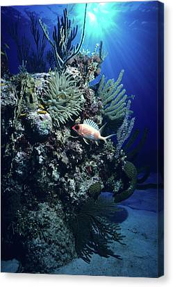 Surreal Reef Collage Canvas Print