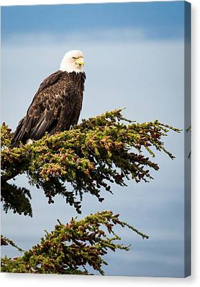 Canvas Print featuring the photograph Surveying The Treeline by Tim Newton