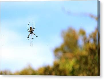 Suspended Spider Canvas Print