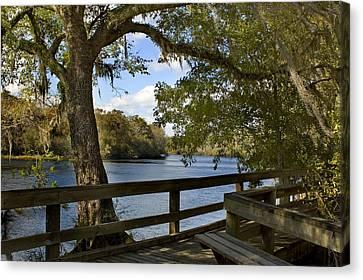 Suwannee River Boardwalk Photograph By Stacey Lynn Payne
