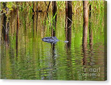 Canvas Print featuring the photograph Swamp Stalker by Al Powell Photography USA