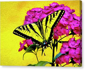 Feeding Canvas Print - Swallow Tail Feeding by James Steele