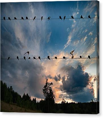 Canvas Print featuring the photograph Swallows by Vladimir Kholostykh