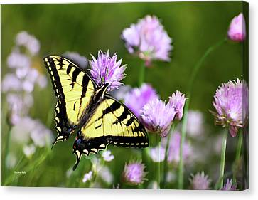 Swallowtail Butterfly Dream Canvas Print by Christina Rollo