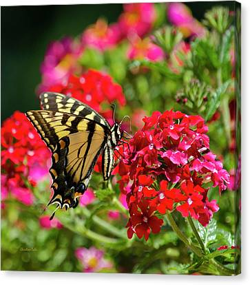 Swallowtail Butterfly On Flower Canvas Print by Christina Rollo