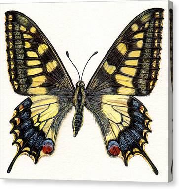 Swallowtail Butterfly Canvas Print by Rachel Pedder-Smith