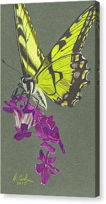 Swallowtail With Phlox Canvas Print