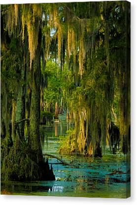 Swamp Curtains In May Canvas Print