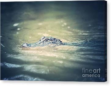 Swamp Gator Blues Canvas Print by Carol Groenen