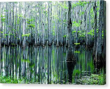 Canvas Print featuring the photograph Swamp In Louisiana by Ester  Rogers