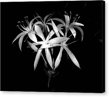 Canvas Print featuring the photograph Swamp Lilies by Peg Urban