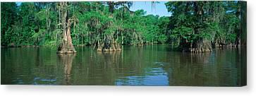 Louisiana Canvas Print - Swamp, Louisiana by Panoramic Images