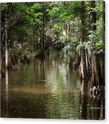 Swamp Road Canvas Print by Joseph G Holland
