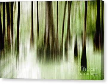 Swamp Canvas Print by Scott Pellegrin