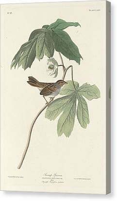 Swamp Sparrow Canvas Print by Rob Dreyer