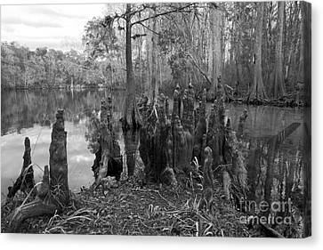 Canvas Print featuring the photograph Swamp Stump by Blake Yeager