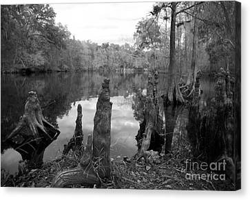 Canvas Print featuring the photograph Swamp Stump II by Blake Yeager