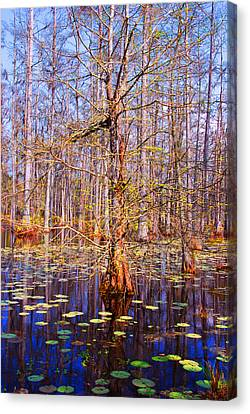 Swamp Tree Canvas Print by Susanne Van Hulst