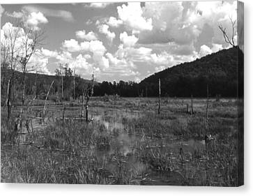 Canvas Print featuring the photograph swamp1-OEM by Curtis J Neeley Jr
