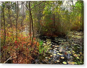 Swamps In Sc Canvas Print by Susanne Van Hulst