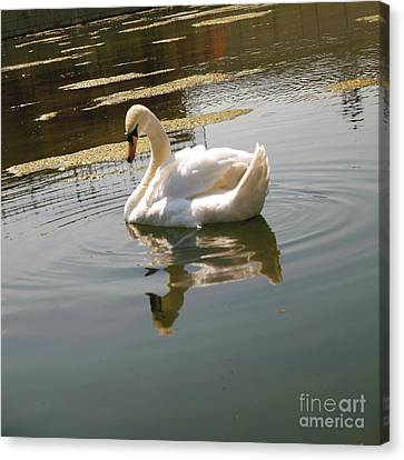Swan At The Chateau II Canvas Print by Louise Fahy