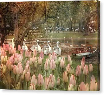Swan Boats And Tulips - Boston Public Garden Canvas Print