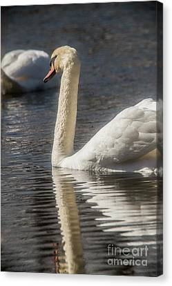 Canvas Print featuring the photograph Swan by David Bearden