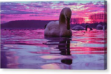 Swan During Purple Sunset Canvas Print