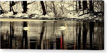 Swan Family Canvas Print by Aron Chervin