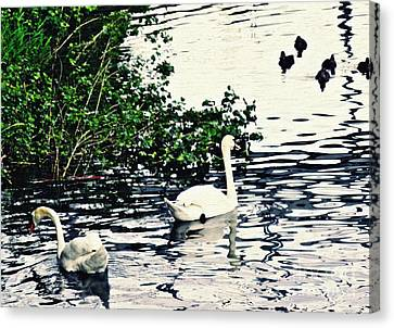 Canvas Print featuring the photograph Swan Family On The Rhine 2 by Sarah Loft