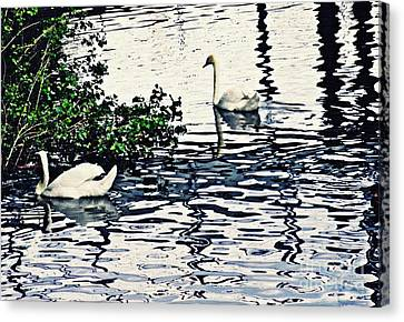 Canvas Print featuring the photograph Swan Family On The Rhine 3 by Sarah Loft