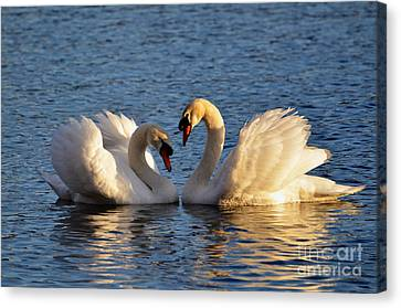 Swan Heart Canvas Print by Mats Silvan