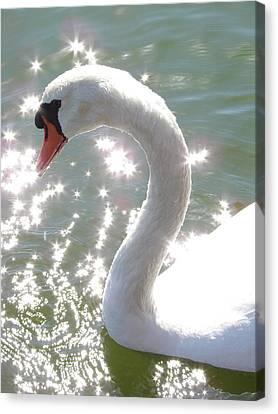 Swan II Canvas Print by Mark Holbrook