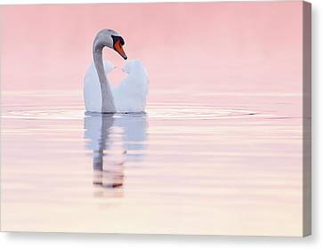 Swan In Pink Canvas Print by Roeselien Raimond