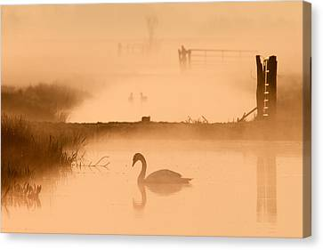 Swan In The Mist Canvas Print by Roeselien Raimond