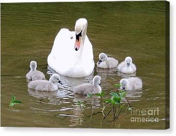 Canvas Print featuring the photograph Swan Lake 1 by Bill Holkham