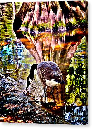 Swan Lake Canadian  Canvas Print