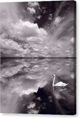 Swan Lake Explorations B W Canvas Print by Steve Gadomski