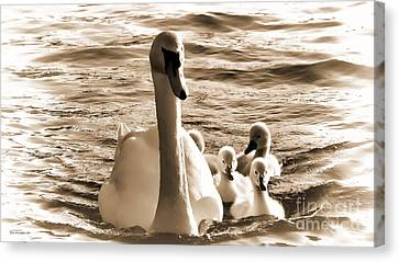 Swan Lake Canvas Print by Jason Christopher