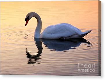 Swan Lake Canvas Print by Joe  Ng