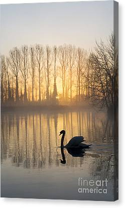 Swan Lake Canvas Print by Tim Gainey