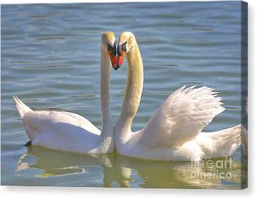 Swan Love Canvas Print by Carol Groenen