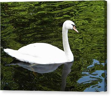 Canvas Print featuring the photograph Swan by Manuela Constantin
